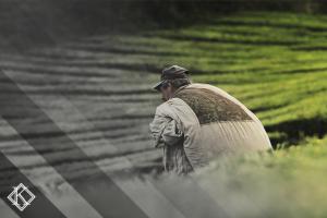 Imagem ilustrando o texto Aposentadoria rural e suas vantagens da Koetz Advocacia